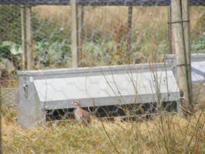 Dymond Galvanised Partridge Feeder