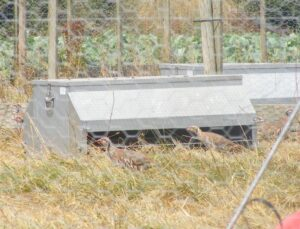 Dymond Galvanised Partridge Feeders with side extension to restrict pheasants