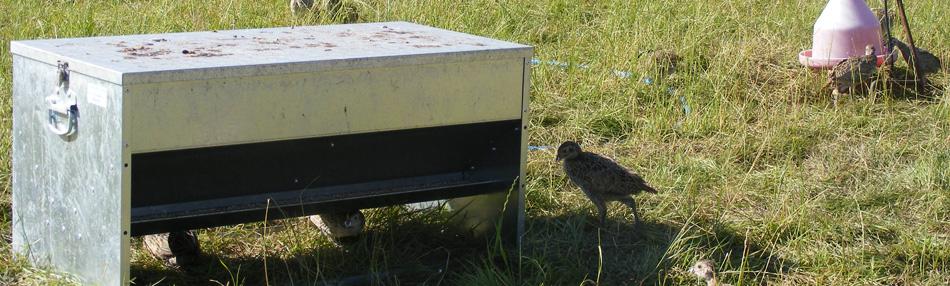 pheasant-feeder2