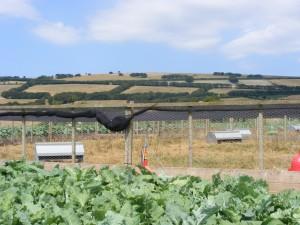 Dymond Galvanised Partridge Feeders in situ
